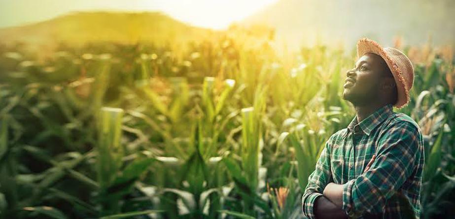 Project FARM, plataforma de dados da Capgemini para pequenos agricultores promete combater a escassez global de alimentos.